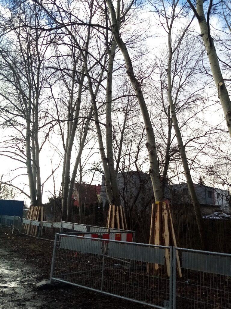 Zabezpieczenie drzew (SOD)